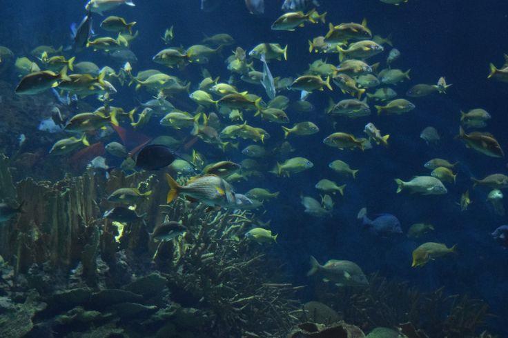 Aquarium, Valencia, Espagne