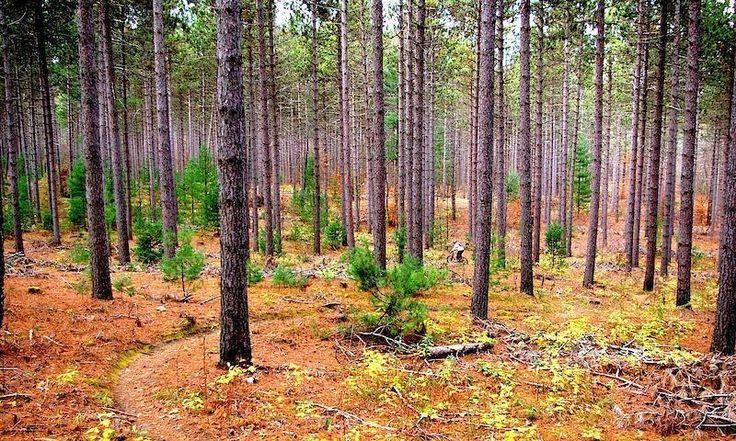 Image result for ganaraska forest