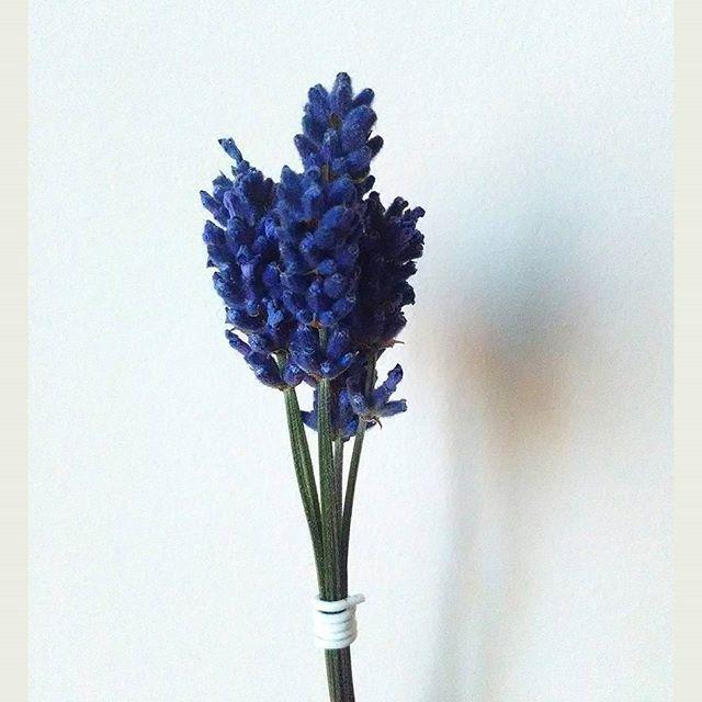 Love my little bouquet! :)