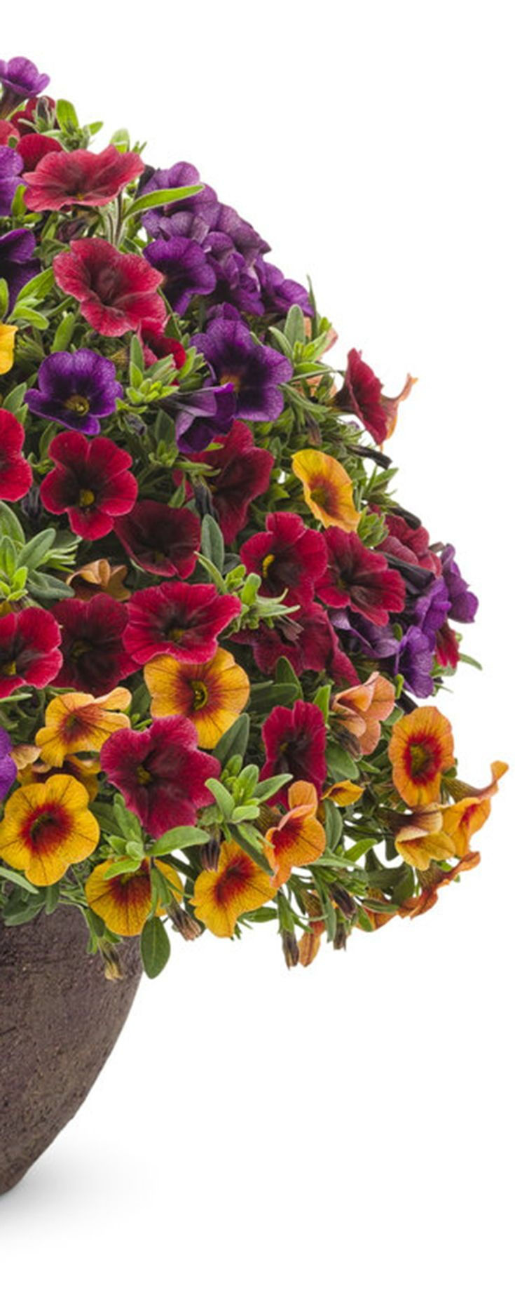 'Summer Punch' is a definite way to ramp up the color on your porch or deck this summer!