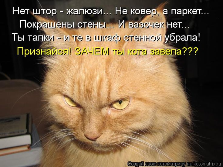 Днем рождения, смешные картинки про рыжих котов с надписями
