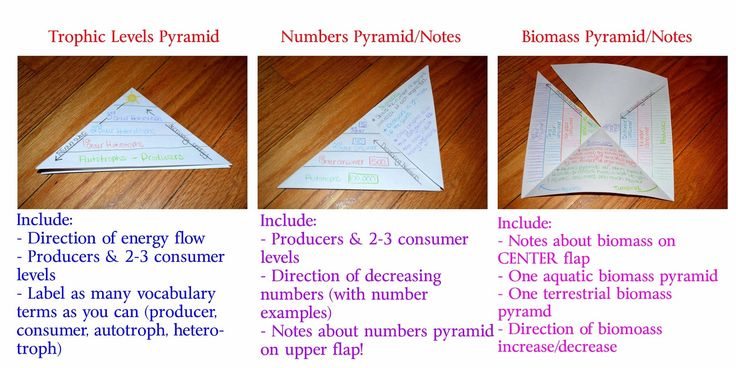The Simply Scientific Classroom: Ecological Pyramids