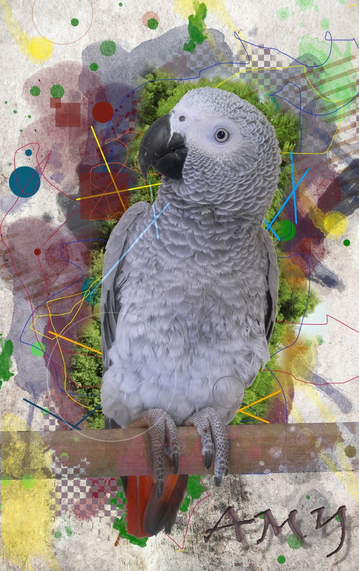 Bert Wallpaper Iphone X 82 Best There S Nuthin Like An African Grey Images On