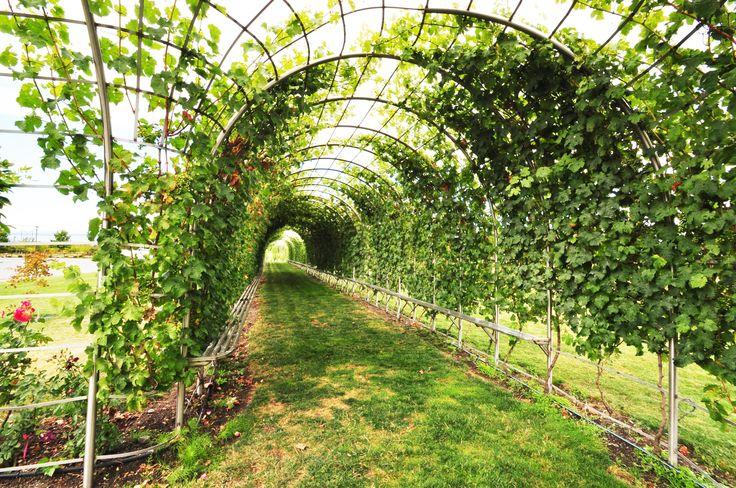 #luluisland #wine #richmondbc #winery #Explorebc