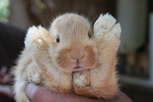 Baby Rabbits | Rabbit, Baby, Animal, Hair, Cute - Free image - 72192
