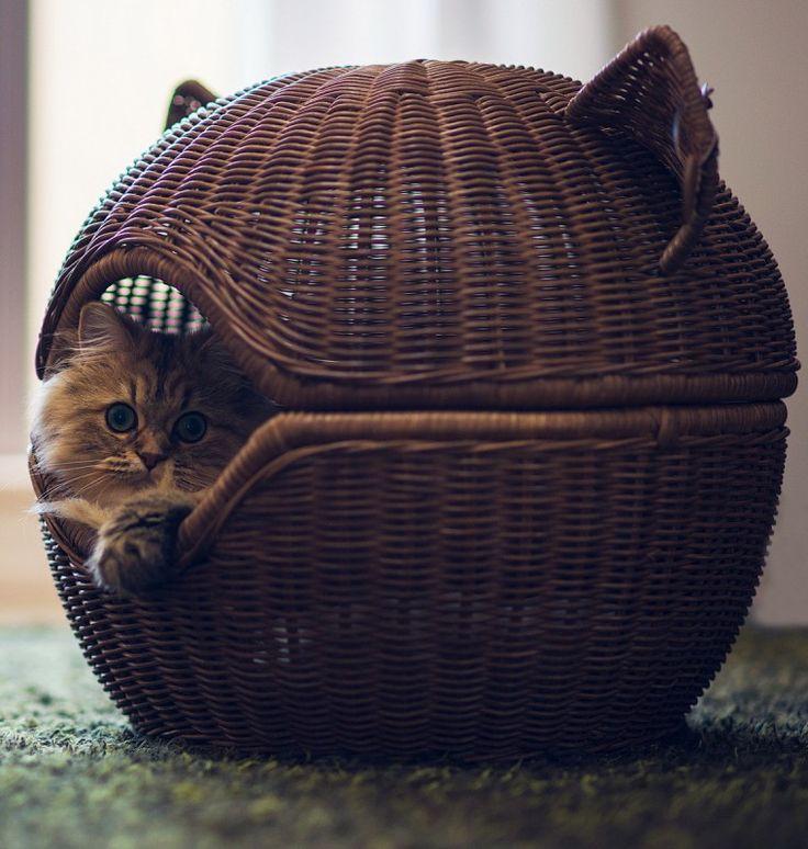 #Cat #Torode #Basket. http://www.mindblowingpicture.com/wallpaper/cats/wp42tkdt.html