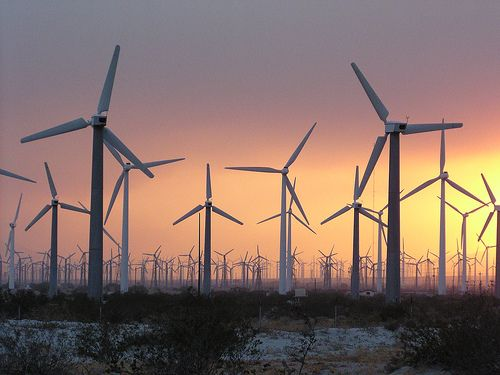 With turbines packed this densely, wind farms can be a significant cause of mortality to flying animals. But do they cause more harm than the carbon-based energy sources they replace?