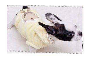 sudadera para perro aterciopelada en color amarillo. Esta prenda de ropa para perro es ideal para días fríos. Tiene un divertido estampado de un mono en la espalda y puntilla en la capucha. http://bit.ly/1ML3MWG