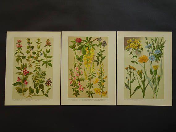 Old botanical print set of three 3 matching original 1918