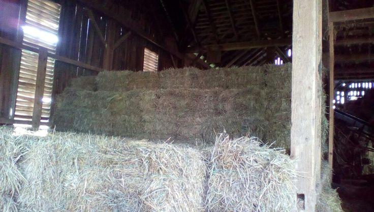 Hay getting higher