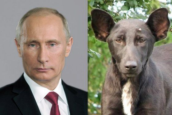 funny pictures of the day (64 pics) Vladimir Putin Look Alike