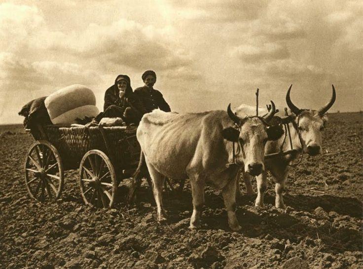 Țărani în car cu boi Dobrogea interbelică văzută de Kurt Kielscher Sursa foto Facebook Istoria românească în fotografii