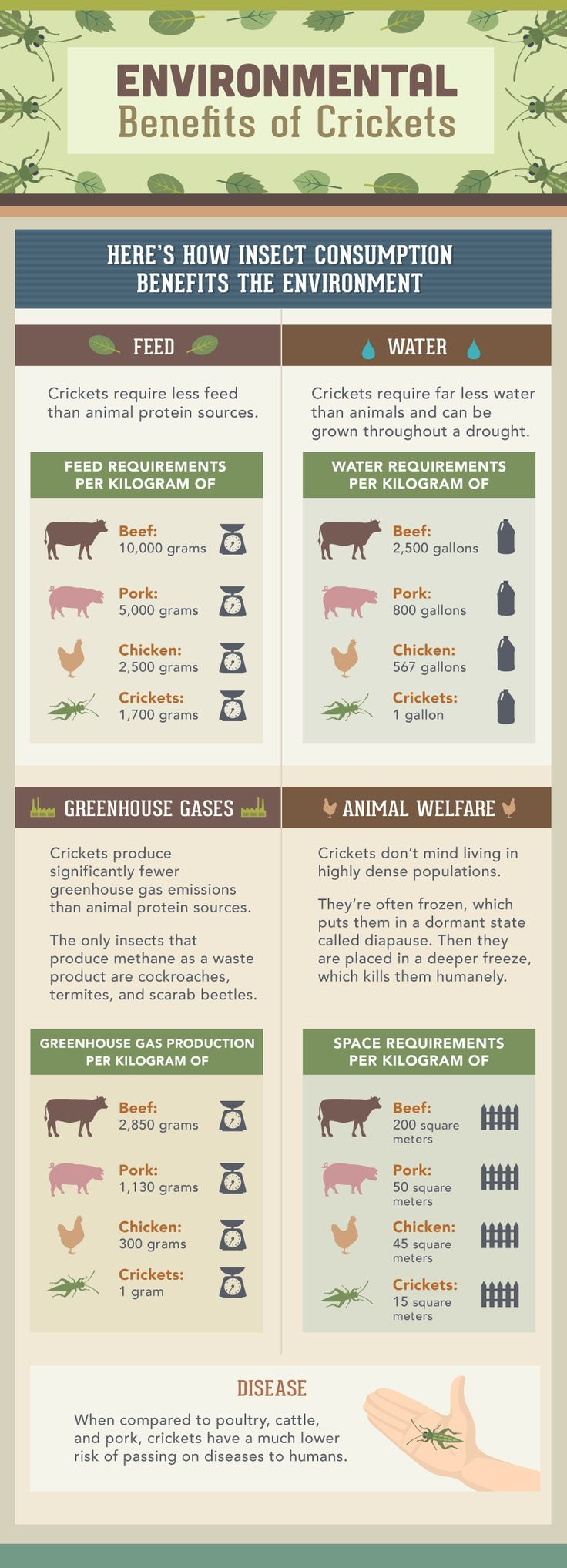 Eating Insects: Environmental Impact