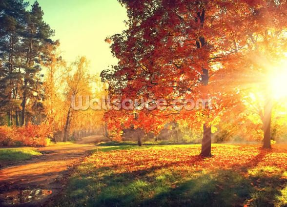 Meadow Flowers reusable or traditional photo wallpaper mural Rays of the setting sun on yellow flowers meadow flowers  mural photo