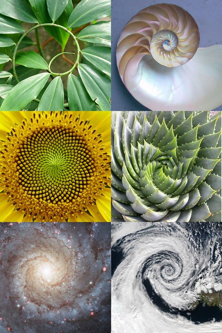 Geometry in nature // Fibonacci sequence// Golden Ratio // Phi point // The same ratio Vitruvius saw in the human body – 1 to PHI (1.618) – exists in every part of nature, from swimming fish to swirling planets. This divine ratio, or divine proportion, has been called the building block of all life.