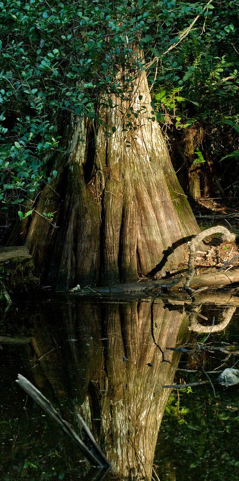 ^Florida Everglades - by DubinPhotography