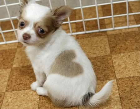 Hund mit herz auf dem Rücken