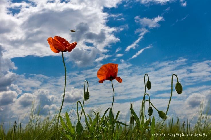 Poppies in the Sky von andreaskrappweisVon Andreaskrappwei, Sky Von