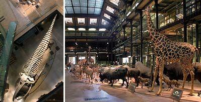 Musee Histoire Naturelle de Paris - La Grande Galerie de l'Évolution