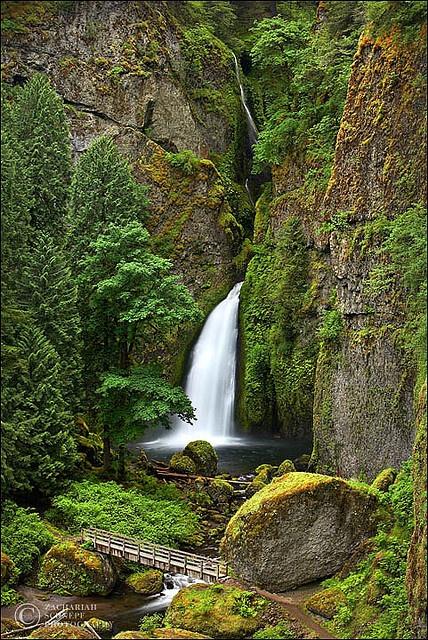 Wahclella in Full Spring Green - Oregon