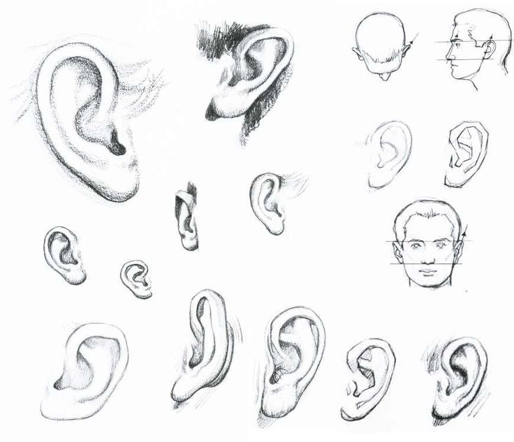 Line Drawing Ear : Best art and photographs that i love images on