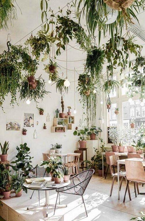 最近、カジュアルで自然体な空間の演出ができるインテリアに注目が集まっています。寒い冬でも、お家の中では暖かい雰囲気を味わいたい♡そんな方にオススメしたいのが、室内で育てられる植物を飾ることです。 でも植物は、水やりをするのが手間だったり、小さなお子さんがいると土の扱いに注意が必要だったりと、少々面倒に感じてしまう方もいるのではないでしょうか。 そこでそんな方も抵抗なく、そして手間がかからずに育てられるのが「エアプランツ」や「テラリウム」などの新しいスタイルの植物のインテリア。今回は、このエアプランツとテラリウムについてご紹介します。