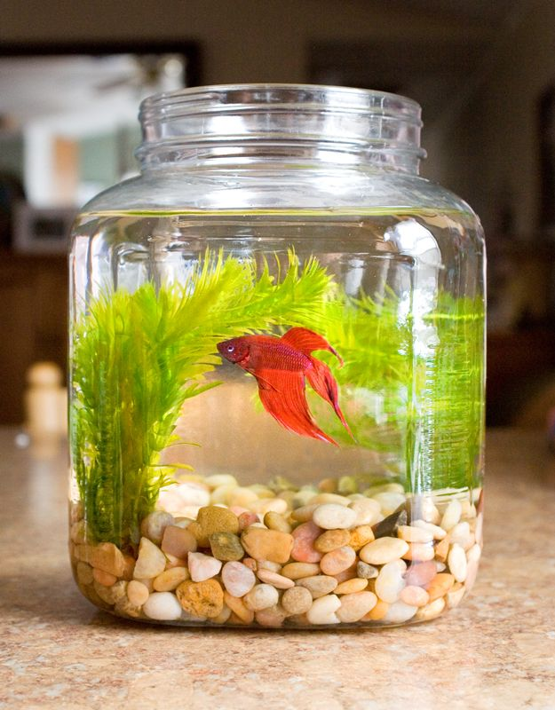 Haven't had a beta fish in years. Making one of these soon :) Will look nice on the kitchen counter.