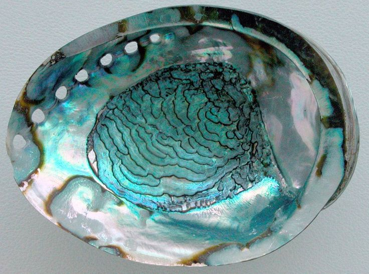 Like the tiniest of pebbles in your shoe, the irritant, well, irritates so in response the oyster secretes a substance called nacre, the oyster's saliva. Description from thebutterflyjungle.blogspot.com. I searched for this on bing.com/images