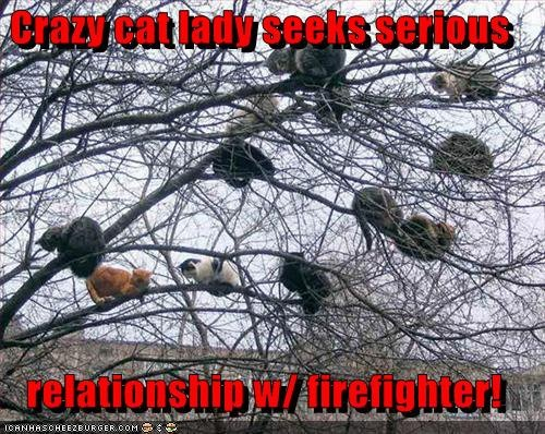 Crazy Cat Lady, seeks serious relationship with a Fireman!Lady Trees, Funny Pictures, Funny Cat, Funny Stuff, Alfred Hitchcock, Cat Trees, Crazy Cat Lady, Kitty, Animal
