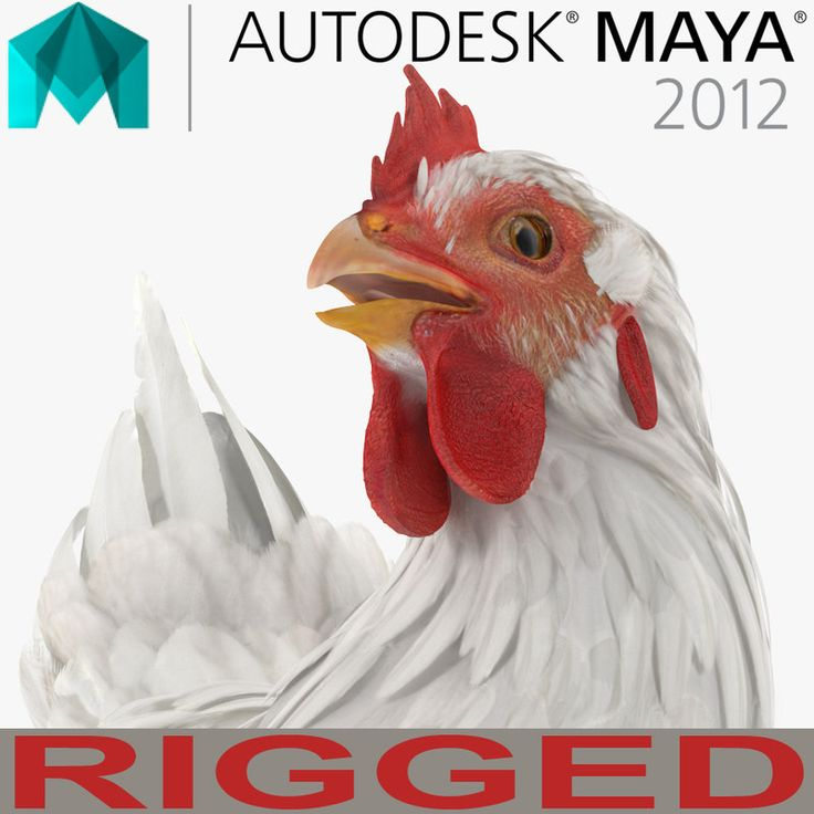 3D White Chicken Rigged for Maya