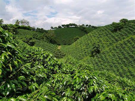 Coffee plantation, Colombia Cafetal Tradicional ::: Atracciones del Parque Nacional del Cafe