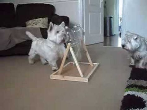 DIY cheap Dog Toy / Treat dispenser / Dog puzzle / Boredom breaker 3 - YouTube