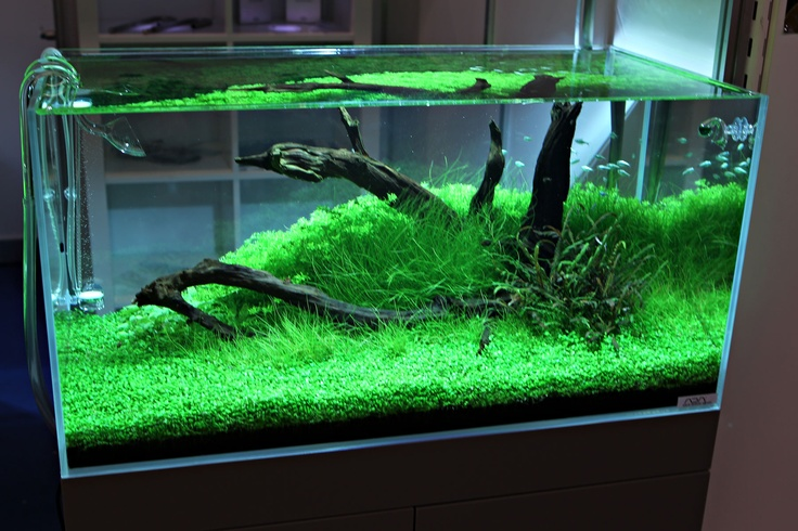 This is what happens when you inject co2 into a fish tank for Co2 fish tank