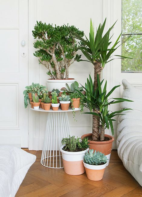 Try painting some old plant pots to breathe new life into your Yucca display. White works as a great contrast to the lush green.: