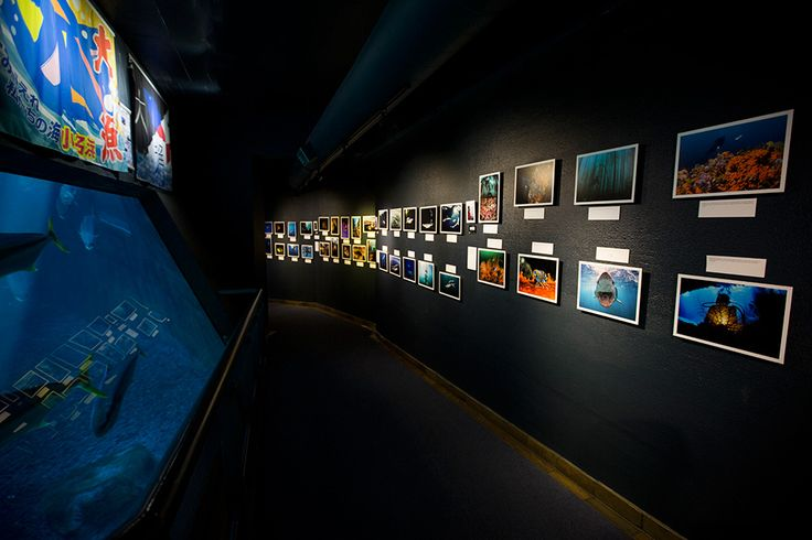 "The Two Oceans Aquarium launched a spectacular underwater photographic exhibition this month, entitled ""Cape Town's Underwater Wilderness""..."