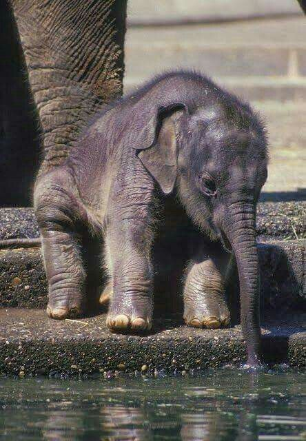 Baby elephants are so stinkin cute                                                                                                                                                                                  More