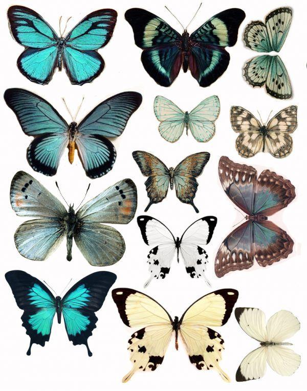 Printable butterflies