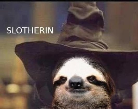 "ahahahahahahaha! They should totally let sloths go to Hogwarts. @Amanda Snelson Snelson Boone ""The 25 Greatest Sloths The Internet Has Ever Seen"""