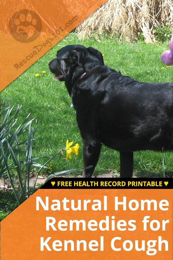 Natural Home Remedies For Kennel Cough Tips For Adopting A Puppy
