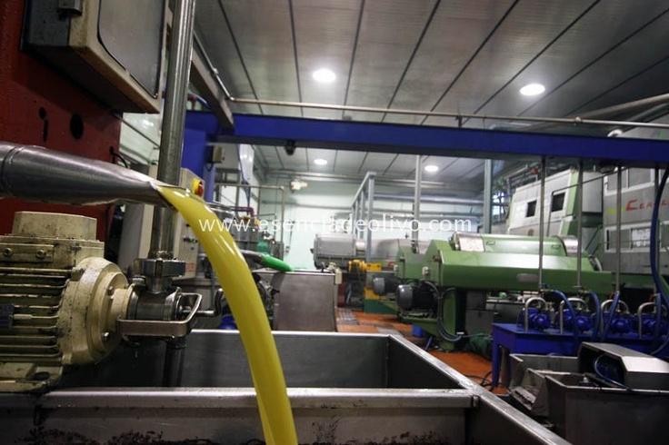 Almazara: fábrica de Aceite de Oliva, hoy en día con la última tecnología al servicio de la calidad y control alimentarios