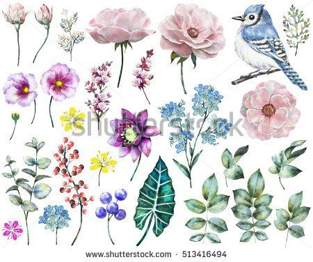 Set watercolor elements of rose, collection garden and wild flowers, leaves, branches flowers, illustration isolated on white background, eucalyptus, bird, blue jay, bud, me-nots, exotic leaf, berry