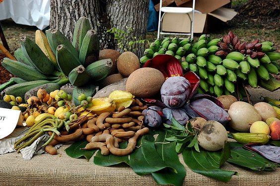 Turismo rural en Miami : Fruit & Spice Park
