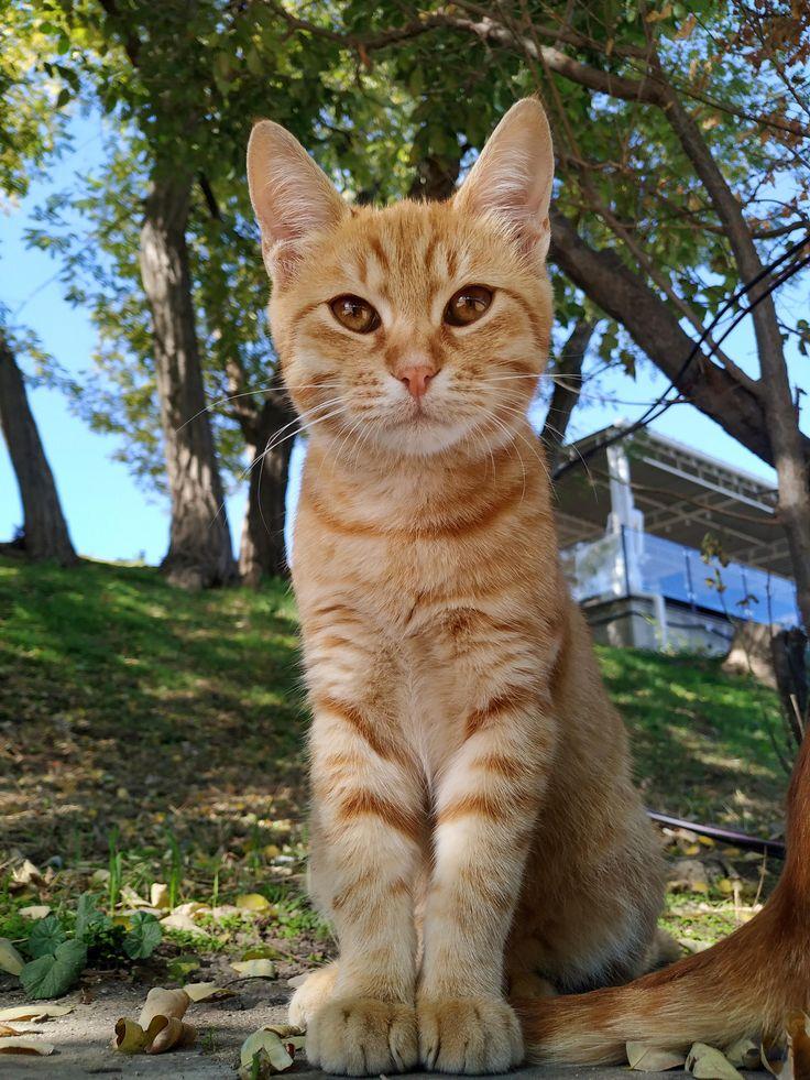 cutest street kitty ever ift.tt/35yAfOp