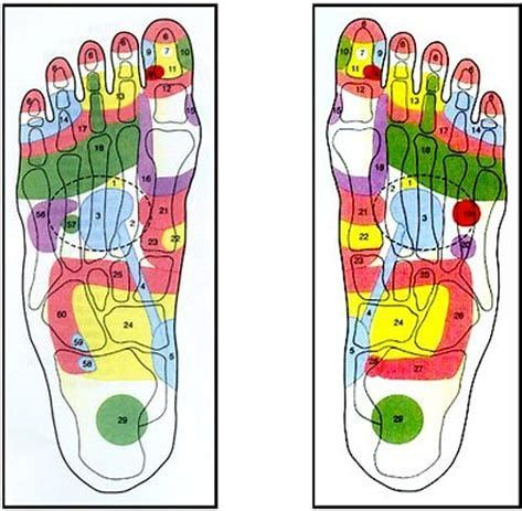 Image result for Foot Acupuncture Points Chart