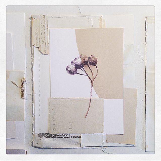 In my studio today.. work in progress . . #sophieklerk #project #collage #collageart #mixedmedia #paper #art #forsale #collage #abstractart #instaart #instaartist #workonpaper #artwork #wallart #mixedmediaart #papergoods #mixedmediaartist  #abstractcollage #contemporaryart #instagood #newseries #newwork #artforsale #originalartwork #botanical #flowers