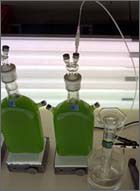 Biological hydrogen production (Algae) - Wikipedia, the free encyclopedia