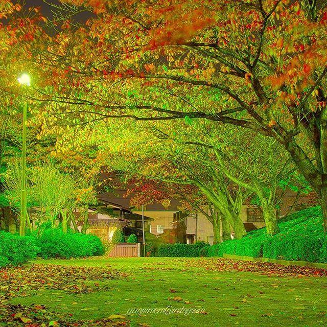 Instagram【yuapimom】さんの写真をピンしています。 《#紅葉ライトアップ  嘘。普通に公園の街灯(笑) 風で葉が揺れる~~~(〜'ω')〜 水曜日は雪⛄の予報らしい(娘情報) いーーーやーーーだーーーーーーーー! . #紅葉 #japan #ミラーレス #ミラーレス一眼 #カメラ女子 #オリンパス #olympus倶楽部 #olympus #olympuspen #epl6 #オリンパスペン  #カメラ初心者 #ファインダー越しの私の世界 #公園 #夜景》