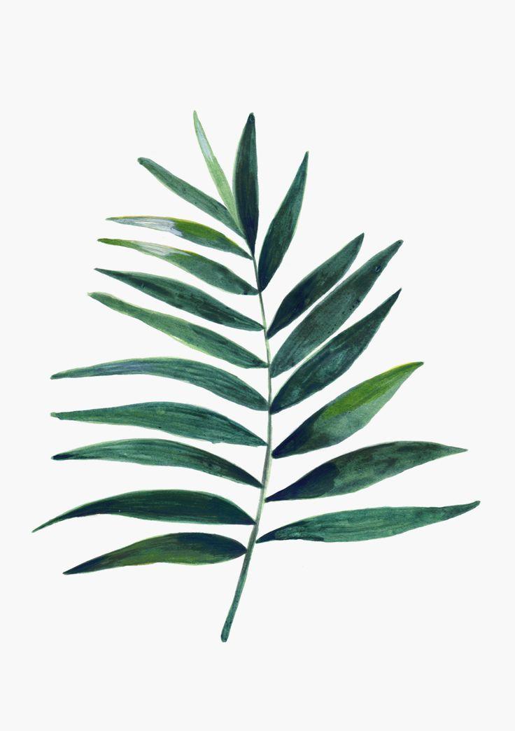 Plantas disponibles en www.hermanogato.comOriginales pintados en acrílico, láminas impresas en papel de 200gr.