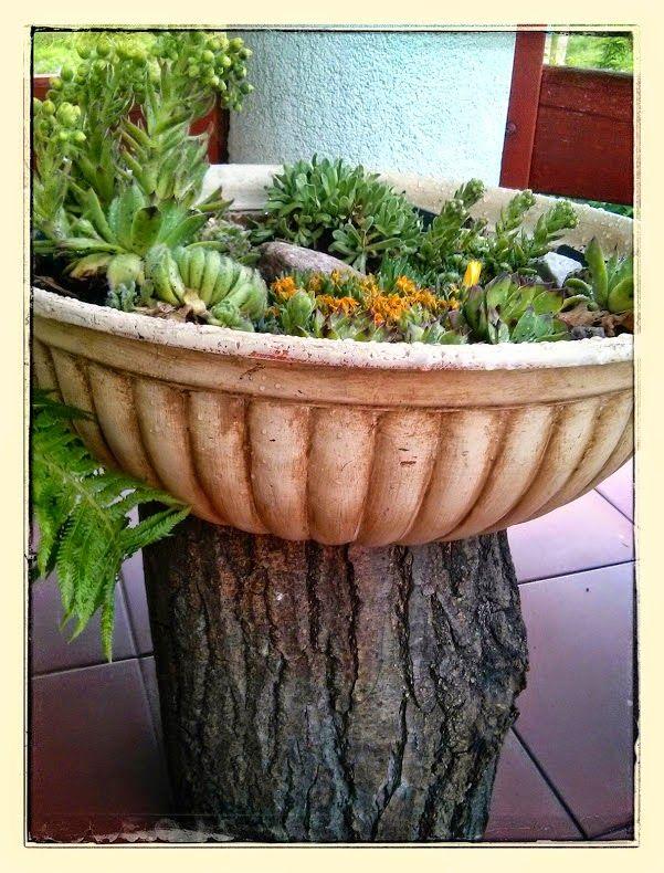 Garden, succulents