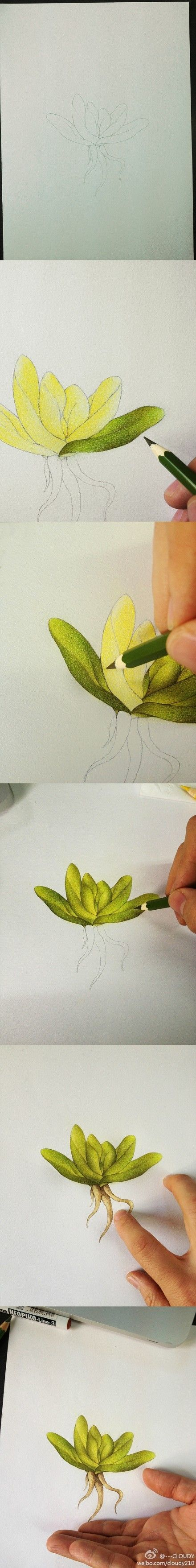 Step by step colored pencil drawing.